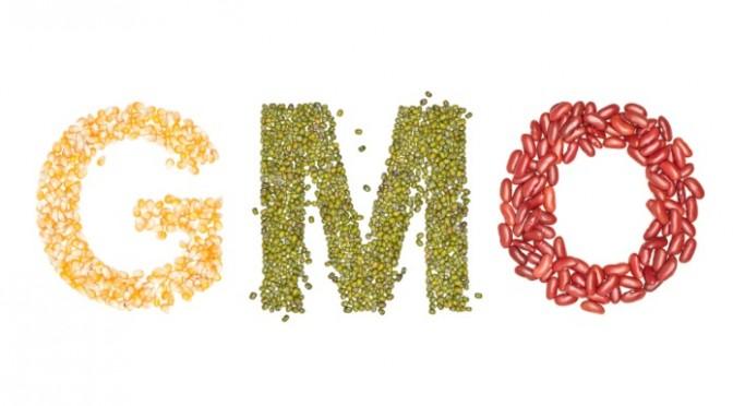 STOCK_GMO