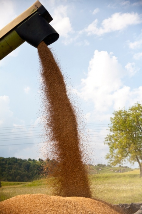 Bunge acquires stake in mid-sized Brazil grains trader