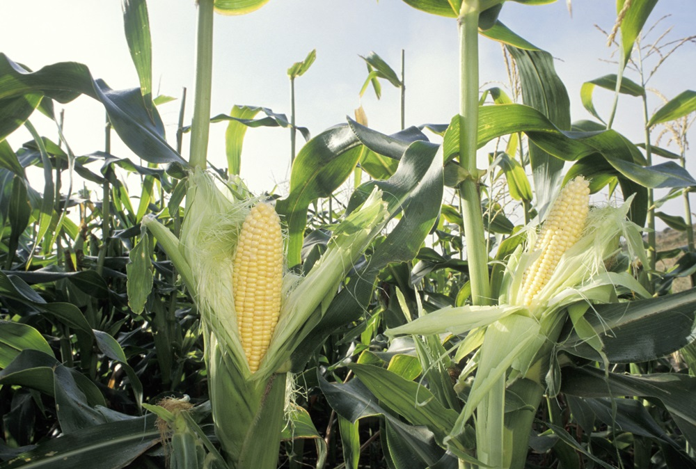 Nebraska Corn Growers Association accepting applications for PRIME Program