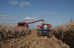 Kansas crops making progress as fall harvest nears