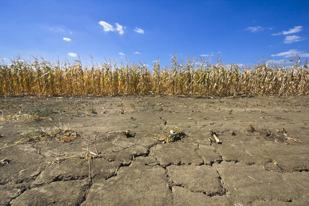Drought Still Burdening Rural Economy in 10 States