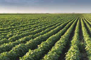 Managing Herbicide Resistance in Soybeans