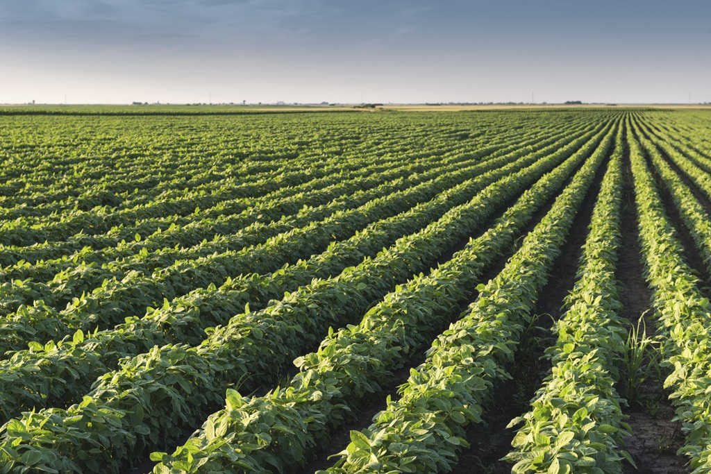 Organic Field Crop Acreage Grows While Non-GMO Acreage Declines