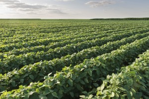 Kansas corn, soybean crops in good shape