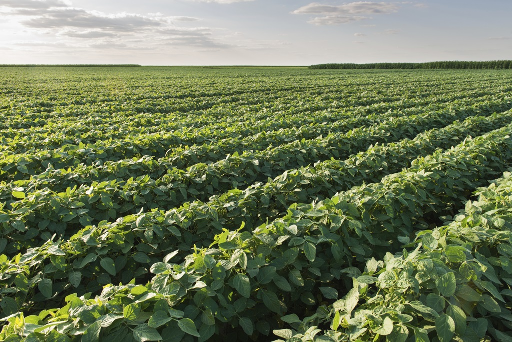 Soy Checkoff Targets Soybean Innovation for Profit Opportunities