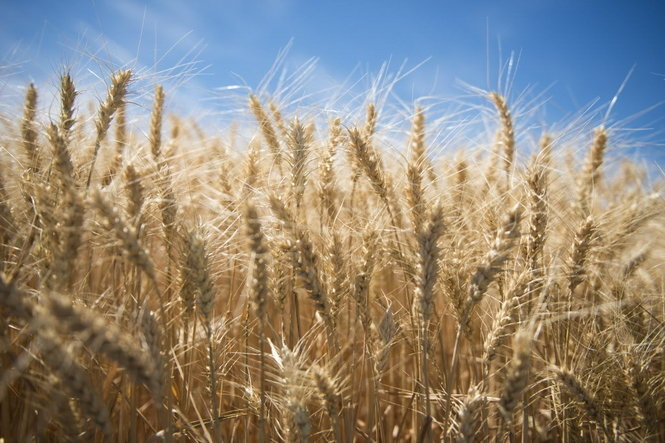 Wheat Growers Talk Farm Bill with Lawmakers in Washington, D.C.