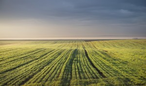 Decent rains and prices lift US winter wheat area