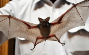 Positive rabies test in bat exposure at local sporting event