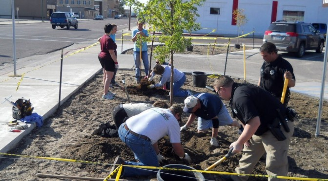 Trees being planted along 1st Avenue in Scottsbluff Wednesday morning.