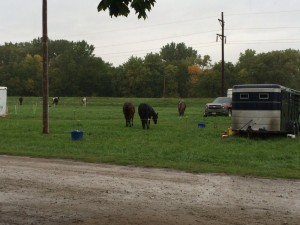 Rain Keeps Riders Stuck At Cuming County Fairgrounds