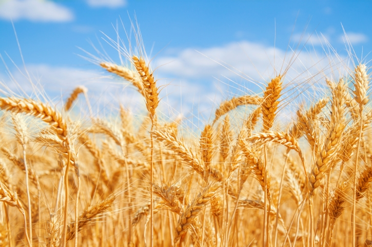 K-State researchers seeking ways to protect flour