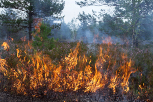 Firefighters battling grass fires in high winds