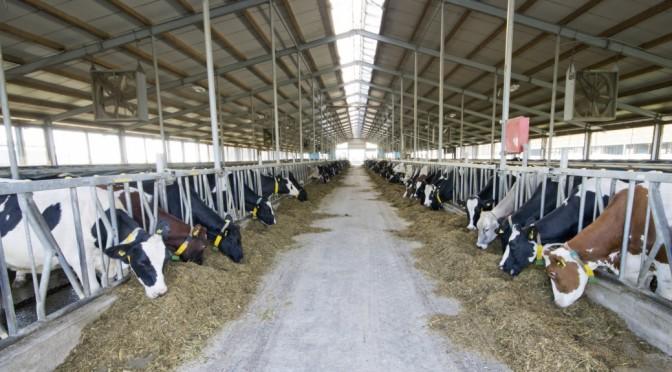 COURTESY_Thinkstock_Dairy Barn