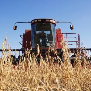 Iowa Farmer Says Someone stole Soybeans by Harvesting Them