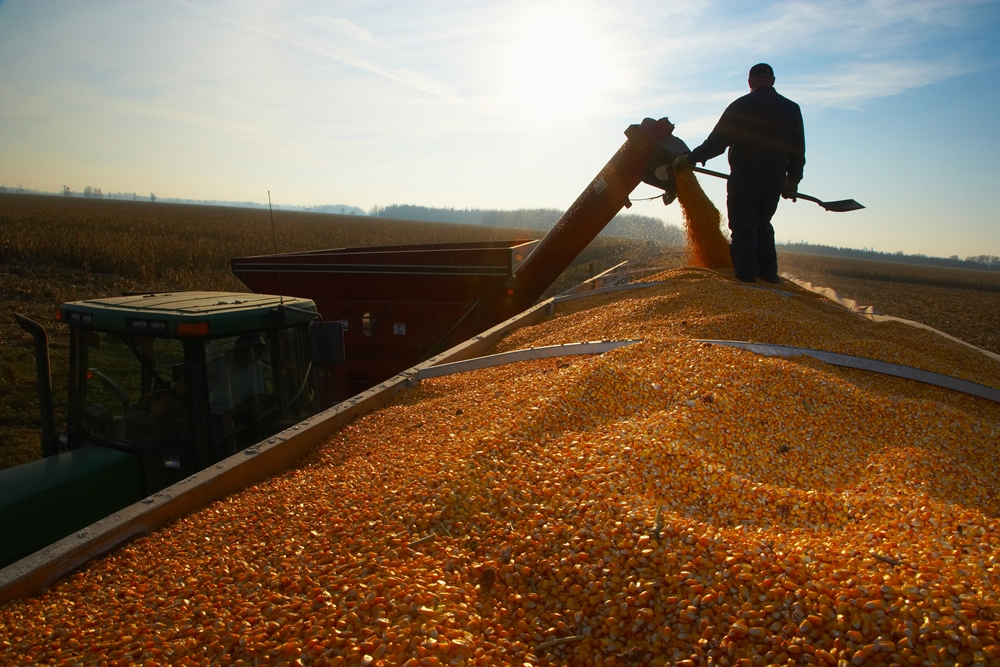 Corn Harvest Still Behind Normal Pace; Winter Wheat Condition Below Average
