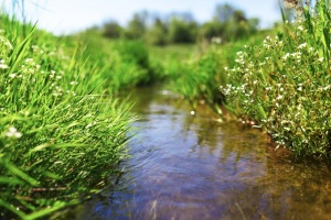 Central Platte NRD Receives Grassland Grant from Nebraska Environmental Trust