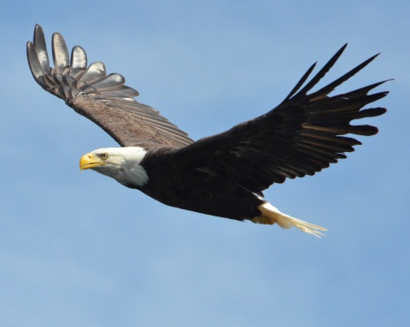 Nebraska man says feds price eagles too high