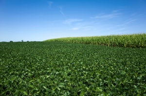 USDA Weekly Crop Progress Monday's Numbers Show Bearish for Corn, Soybeans