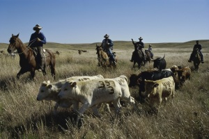 Cattlemen Launch Monthlong Media Campaign for Comprehensive Tax Reform