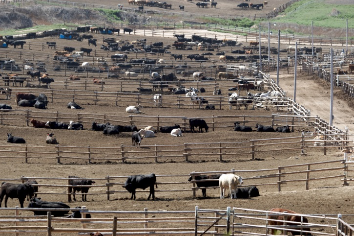 Cattle feeders agree to penalties for water law violations