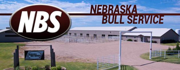 Nebraska Bull Service