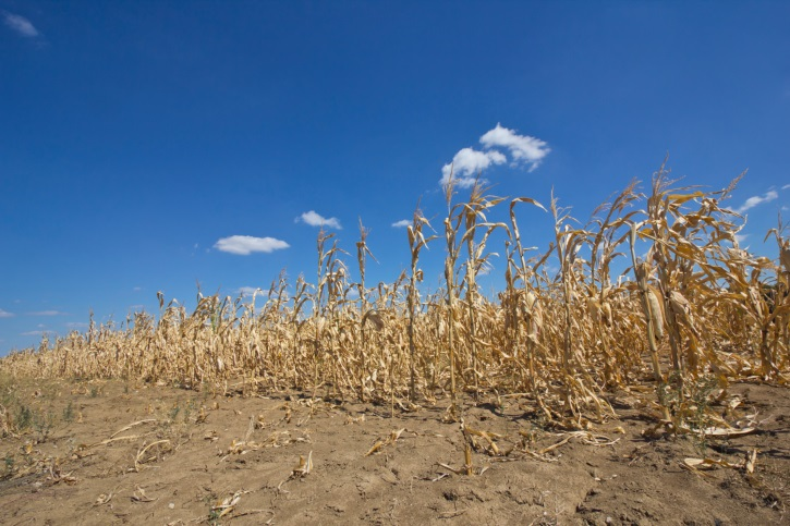 Kansas Corn Planting Will Soon Move into High Gear, but Drought Persists