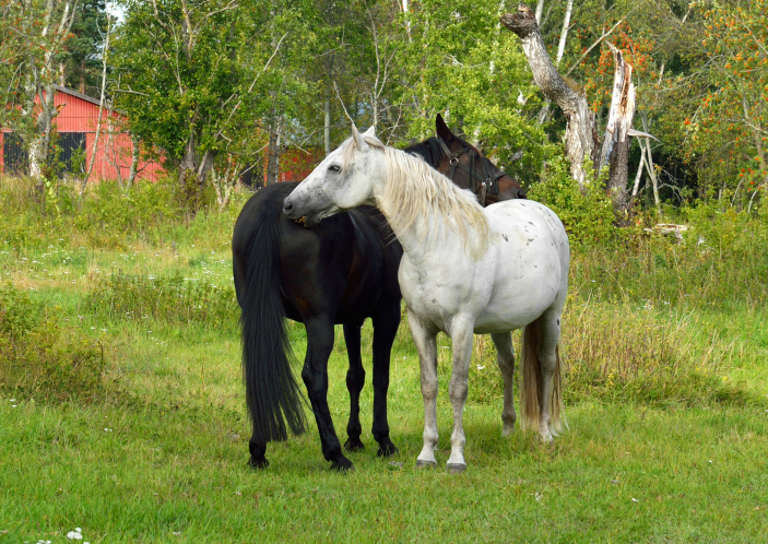 Court arguments Monday in Wyoming wild horse roundup case
