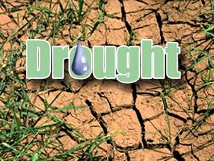 drought-drip_medium