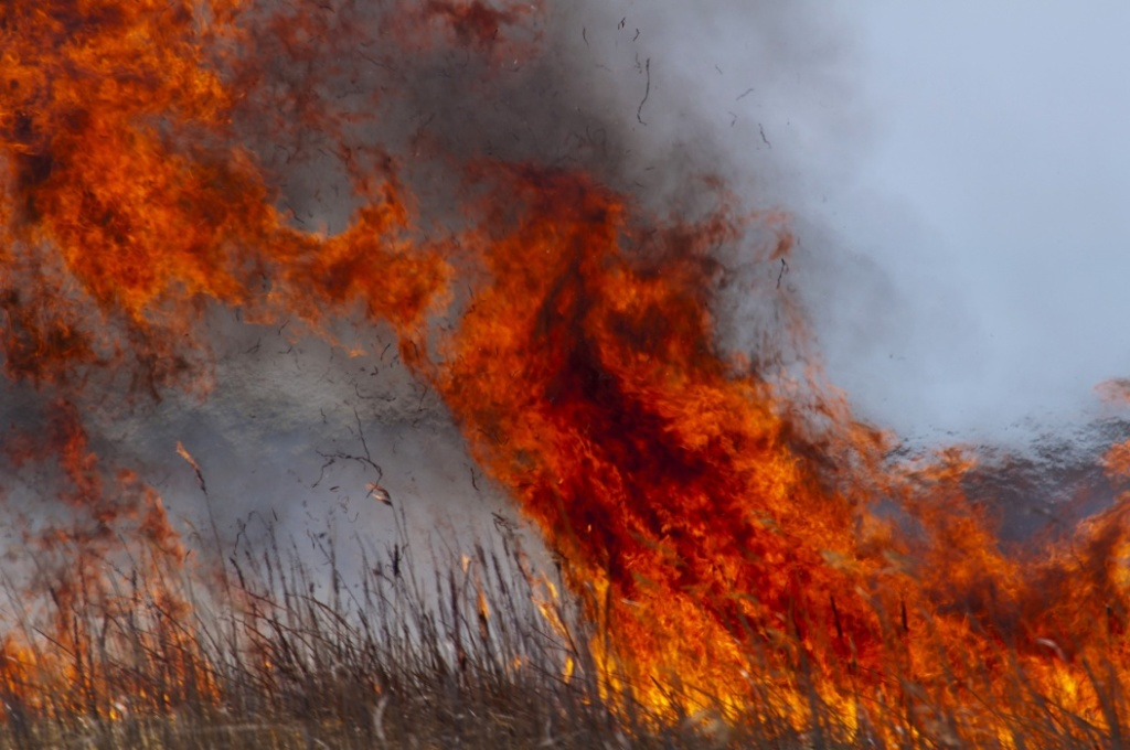 Learn What is Needed to Conduct a Prescribed Burn