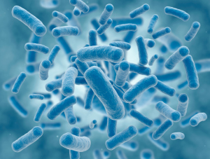 Research into E. coli Promising