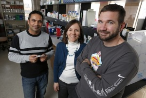 ISU Scientists Identify a Seed Treatment to Curtail Soybean Sudden Death Syndrome