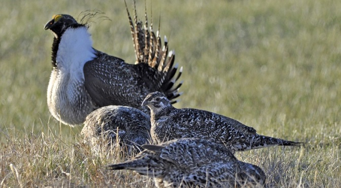 Jeannie Stafford/U.S. Fish and Wildlife Service via AP