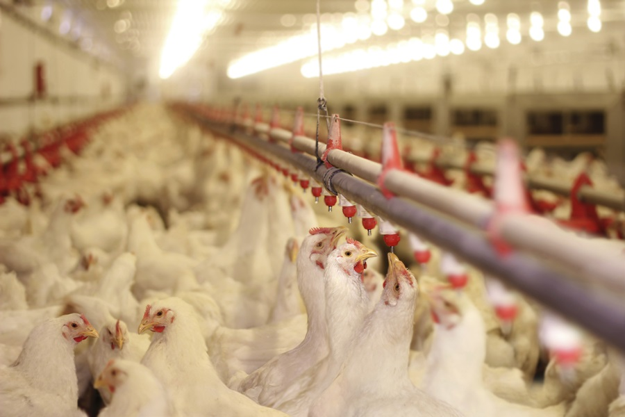 Kansas Senate approves chicken house expansion