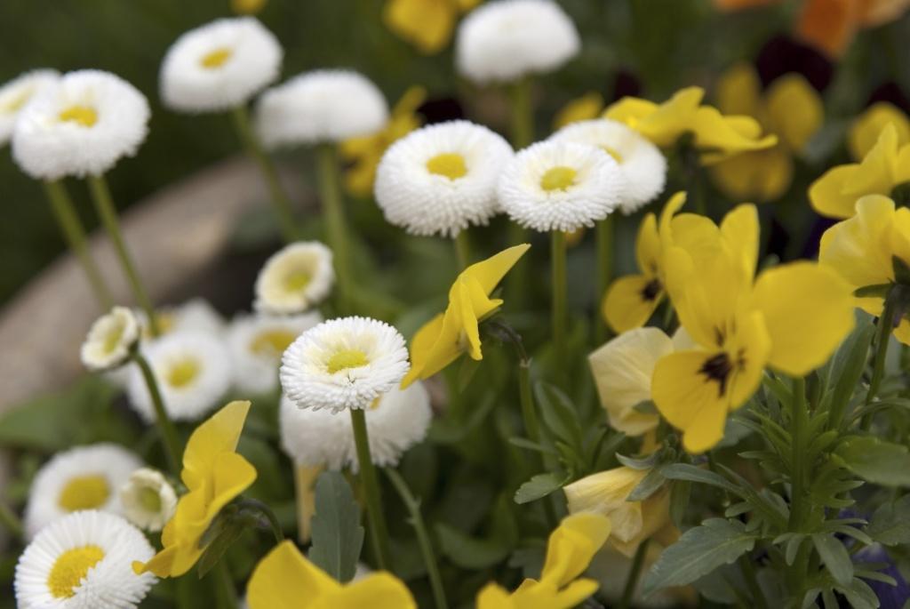 Holdrege Teen Turns Park Spot Into Pollinator Garden