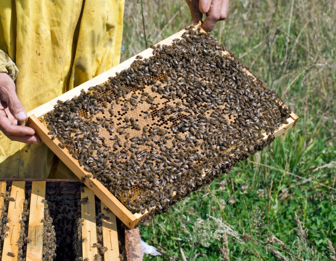 'Bee' Aware: USCA Issues Best Management Practices for Pollinator Health