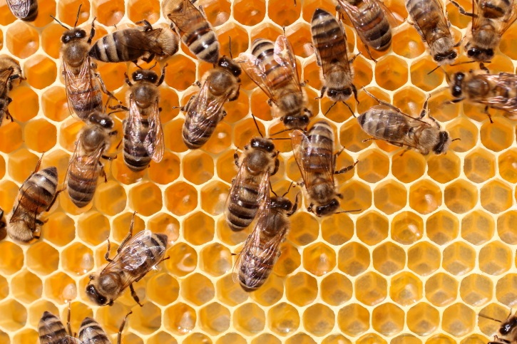 2018 NEBRASKA & KANSAS HONEY BEE COLONIES