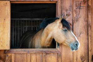 Volunteers help train horses rescued from Nebraska farm