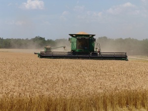 Great American Wheat Harvest Movie Wins Emmy