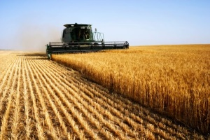 Kansas Wheat Harvest Dodging Rains, Disease