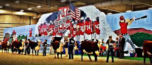 (Audio) Record Number of Hereford Cattle Shown in Grand Island