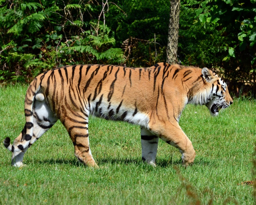 Henry Doorly Zoo to open tiger breeding facility