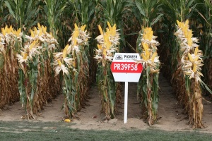 DuPont Trims Outlook on Ag Sector Weakness
