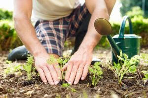 Extension Master Gardener Classes Start January 10th