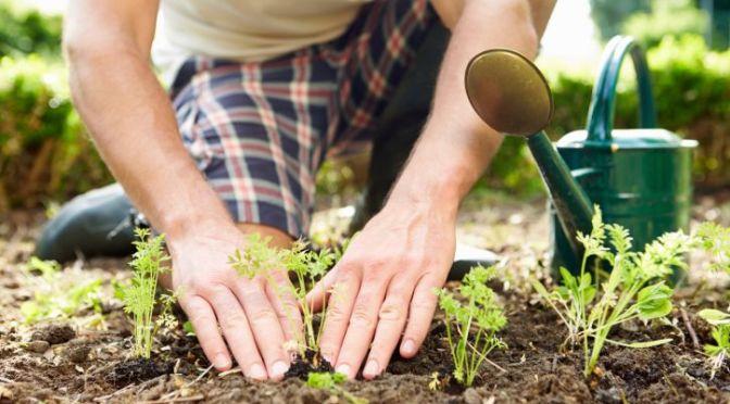 459405181/iStock/ThinkStock.  Garden.