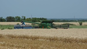 Kansas Wheat Harvest Report-Days 10 & 11
