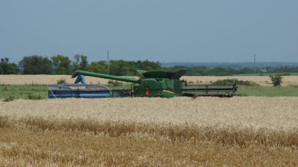 Image Courtesy of Kansas Wheat Commission.