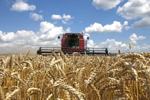 Winter Wheat Harvest Now In Full Swing Across Kansas