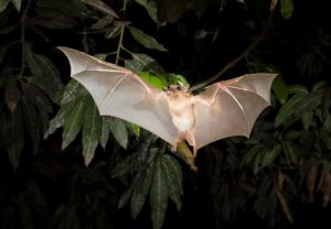 Bats: A Common Fear in Homes This Time of Year