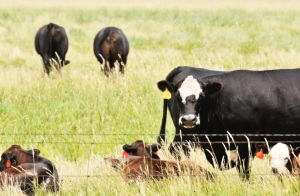 "EPA Administrator to Cattlemen: ""You Care Deeply About Clean, Healthy Environment"""