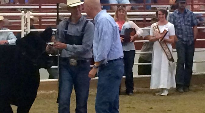 Courtesy/ Nebraska State Fair.   Gov. Pete Ricketts, assists Beef Cattle judges in the Five Points Bank Arena eifers and bulls in the Open Class Supreme Championship show.
